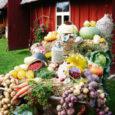 """Jõulud on traditsioonilise Eesti toidu söömise kõrgaeg. Just sel ajal tunneme vastupandamatut isu verivorsti, sealiha ja hapukapsa järele. Tänu projektile """"Eesti toit"""", mille eestvedajad on põllumajandusministeerium ja Eesti Põllumajandus-Kaubanduskoda, on Eesti toit olnud aktuaalne teema läbi kogu tänavuse aasta. Seni on projekti """"Eesti toit"""" puhul rõhutatud ennekõike selle põllumajanduslikke aspekte, kuid mina tõstaksin esile Eesti toidu ajaloolis-kultuurilist tausta."""