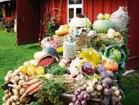 Eesti toit on kultuuri küsimus
