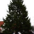 Kuressaare kesklinnas kestab jõuluaeg veel tuleva nädala esmaspäevani, sest just siis hakatakse maha võtma linna suurt jõulupuud.