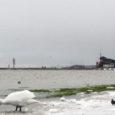 Kuressaare linnavalitsusel on kavas tellida uurimustöö, hindamaks Kuressaare lahe ökoloogilist seisundit ja prognoosida selle veekogu võimalikke arenguid 2030. aastani.