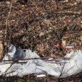 Möödunud nädalavahetusel Kudjape kalmistu Saksa sõjaväelaste puhkepaika külastanud kõrge külaline Saksamaalt pahandas, et kalmistuga piirnev territoorium on hooldamata ning kohalikud elanikud ladestavad sinna oma olmeprahti.