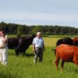 Kunagise suurmajandi lüpsikarjafarm Kärla vallas on nüüdsest OÜ Saare Veisekasvatus kasutada. Farmi uuteks asukateks on mitut tõugu lihaveised.