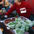 Kuressaare turul müüdavate aedmaasikate kilohind on kordi madalam kui alles paari nädala eest, mil esimesed mammud lettidele jõudsid.