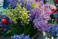 Kaitsealused orhideed võivad tuua turumüüjale trahvi