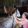 Lümandas Kipi-Koovil avab sealse matkakeskuse pererahvas peagi miniloomaaia, kus külastajatele näidatakse nii omi eestimaiseid loomi kui ka kaugemalt pärit elukaid. Viimased asukad – eesel ja kaks laamat – saabusid tallu möödunud neljapäeval.