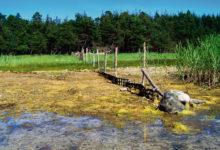 Kas riigi ostueesõigus ahistab maaomanikku?