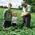 Mustjala mail on mardikas jõudnud pea kõigi kartulikasvatajate põldudele.