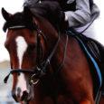 Nädalavahetusel Tallinnas Veskimetsa ratsakeskuses toimunud rahvusvahelistel võistlusel Alexela rahvuste karikale näitasid kõrget klassi Saaremaa ratsaspordiklubi noored Tika ratsatalust.