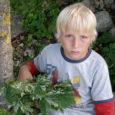 Eesti dendroloogia imelaps, seitsmeaastane Samuli Martin avastas Saaremaal vanaema juures suvitades uue vahtrapuu vormi, mille Eesti Dendroloogia Selts kavatseb poisi nime järgi ristida Samuliks.