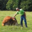 Muhus Pädaste külas asuva Jõe talu peremees Mati Kumpas (62) peab juba 13 aastat loomakarja endises Muhu kolhoosi Pädaste laudas.