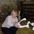 Peipsi-äärsest Mustveest pärit Aive Kesküla on Rauni POÜ juhataja – energiline, laia silmaringi ja suurte kogemustega juht, kes teab, mida ja kuidas. Lõpetanud 1992. aastal Eesti põllumajanduse ülikooli veterinaaria erialal, leidis Aive mõnda aega rakendust Pöide vallas loomaarstina ning suundus seejärel tööle Tagaverele, algul seemendustehnikuna, kaks aastat hiljem sai temast aga juba ühistu esimees.