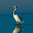 Kuigi astronoomiline sügis ei ole veel kätte jõudnud, on ornitoloog Veljo Volke sõnul lindude jaoks sügis juba alanud. Esimesed rändajad olid suurkoovitajad, kes alustasid edela ja lääne suunas lendu juba juulikuus.