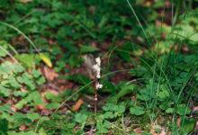 Tänavusele orhidee-aastale paneme hüüumärgi