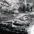 """Viimane sõnum maailmale. Saksa okupatsiooni ajal tuleb Saaremaa ajaleht Meie Maa (tõsi, natside tulekut nimetab ajaleht kangekaelselt eesti rahva vabastamiseks, Hitlerit peetakse aga """"suure ürituse elluviijaks"""", ja seda isegi 1943. aastal; ses suhtes on MM-i ajakirjanikud väga lojaalsed – toim) 1941. aasta septembrikuu sündmuste juurde veel korduvalt tagasi."""