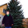 Orissaare alevikus elav Aleksander Salu kingib oma hoovis kasvava kuuse vallale jõulupuuks, kuna okkaline hiiglane kasvab majale liiga lähedal ning segab värvimistöid.