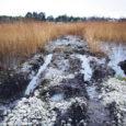 Omavoliliselt üle võõra maalapi Nasva jõeni ja läbi jõe teed rajama asunud Lipimätas OÜ on tõstnud tagajalgadele nii Kaarma vallavalitsuse kui ka keskkonnainspektsiooni.