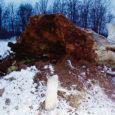 Ööl vastu uue kalendriaasta algust murdus Muhumaal Hellamaa külas Võlla hiietammena tuntud pühapuu. Mõned nädalad varem raiuti maha kuivanud tamme ümbritsenud noored puud ja nõnda jäi pehkinud tüvi üksinda tuulte meelevalda.
