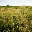 Keskkonnainvesteeringute keskuse (KIK) keskkonnaprogrammi selle aasta teise taotlusvooru on Saare maakonnast esitatud 48 keskkonnaprojekti, milles küsitakse toetust kokku 1 648461 eurot. KIK-i Saaremaa projektispetsialisti Terje Volke sõnul oli kõige rohkem […]