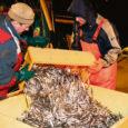 Keskkonnainspektsiooni Saaremaa büroo konfiskeeris viis tonni kala ja piirivalve määras 2400 krooni trahvi Läti kaluritele kalalaevalt Grifs, mis avastati ebaseaduslikult kalapüügilt Eesti territoriaalvetes, 28 kilomeetrit Sõrve säärest edelas.