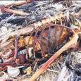 """Teadlaste väitel hulbib mööda Vaikset ookeani prahist, peamiselt plastikprügist tekkinud """"saar"""", mis kasvab enneolematu kiirusega – kui veel mõni aasta tagasi olid selle mõõtmed võrreldavad Lääne-Euroopa pindalaga, siis täna ületab """"prügisaare"""" pindala juba kahekordselt Ameerika Ühendriikide territooriumi."""