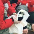 Laupäeval lasti Sõrve sääre linnuabikeskuses vabadusse esimesed reostusest taastunud aulid. Riikliku looduskaitsekeskuse Saare regiooni direktori Tõnu Talvi andmetel on kahe nädala jooksul leitud 300 määrdunud lindu, kellest 85 on reostuse tagajärjel surnud.