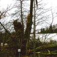 Ilmateenistuse andmetel on laupäeval oodata sisemaal puhanguti kuni 30, Saaremaal ja Hiiumaal kuni 35 meetrini sekundis ulatuvaid tormiiile. Praeguste ilmaprognooside järgi võib oodata ulatuslikke elektrikatkestusi, mille kõrvaldamiseks on kõrgendatud valmisolekusse […]