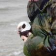 Oma Saar käis uurimas, kuidas Sõrves linde puhastatakse ja taastuda aidatakse. Pealegi oli laupäeval linnuabikeskuses oluline sündmus – tagasi loodusesse lasti esimesed reostusest taastunud aulid.