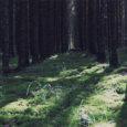 """Saaremaa kõrgeimas punktis, Viidumäe iidsetes metsades elab Jaanus. Mees, keda võiks kutsuda elavaks ajalooks. Ta on mees, kellele kuuluvad sõnad """"Töll, Töll tule appi!"""" ning koos Saaremaa vägilasega on ta lahingus valanud rohkemate vaenlaste verd kui tänapäeval Saaremaal elanikke."""