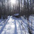 Neljapäeva õhtul jäi Pöide vallas Reina küla lähedal asuvas metsas langeva puuoksa alla 51-aastane Ants, kes suri kohapeal. Antsuga koos olnud Kalju sõnul kukkus mehele pähe teiste okste vahelt õhku paiskunud puuoks.