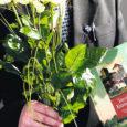 """Eile oli viimane tööpäev Kuressaare linnavalitsuse heakorra järelevalvespetsialistil Lembit Rätsepal. """"Kui teised on nooruses töökohti vahetanud, siis mina proovin vastupidi – mida vanemaks saan, seda rohkem tahan proovida uusi väljakutseid,"""" ütles kaks aastat Kuressaare heakorraspetsialistina töötanud Rätsep Oma Saarele, selgitades, et ta lihtsalt tundis ühel hetkel, et tema aeg sai täis. Rätsepa sõnul ei ole heakorraspetsialisti töö kergete killast. Kui kuulutatakse välja konkurss ja uus inimene ametisse saab, siis peab ta olema väga vapper ja visa, sest heakorratöö ei lõpe, märkis Rätsep."""