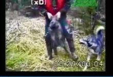Saaremaa metsseavideo ärritas ka soomlasi