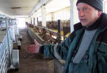 Saaremaa ökokülas võeti kasutusele uus lambakasvatustehnoloogia