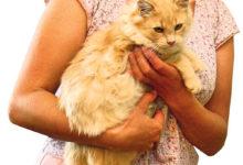Üürikorteris loomi pidanud naine kolis Läänemaale