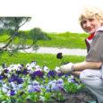 Vastavalt traditsioonile kaunistab Kuressaare Linnamajandus ka sel aastal linna eesootavaks sünnipäevaks. Üleeile alustati Kuressaare haljasaladele kevadlillede istutamist.