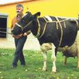 Maikuisel kontroll-lüpsil suutis Kõljala POÜ mustakirju lehm Täpik anda piima 79,3 kilogrammi päevas, mis on Eesti absoluutne päevalüpsirekord. Eelmine tipptulemus – 76,8 kilo – oli kaks ja pool aastat püsinud Põlvamaa lehma Hesa käes.