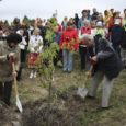 Muhu rahvas istutas laupäeval talgute korras 99 puud, et anda tagasi elu Väikese väina tammi otsast algavale Presidendi alleele, millele pani aluse Konstantin Päts 1939. aastal kahe tamme istutamisega.