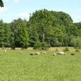 Põllumajandusministeerium küsib õiguskantslerilt seisukohta Natura 2000 toetuste maksmise õiguspärasuse osas, sest olemasolev ühesuguse määraga toetus ei pruugi alati olla vastavuses kitsenduste ja piirangutega, mille hüvitamiseks seda makstakse. Uue maaelu arengukava […]