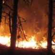 """Pühapäeval kell 22.59 põles Kaarma vallas Kellamäe külas 20x 30 meetrisel alal männimetsaalune pinnas. Päästjad kustutasid põlengu kululuudade ja veega. Viimase aja kuumade ilmadega on loodus muutunud väga tuleohtlikuks. """"Metsas […]"""