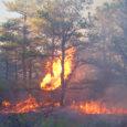 Jätkuva põua ja suureneva tuleohu tõttu soovitavad looduskaitsjad ja päästeamet omavalitsustel metsades liikumine ja tuletegemine keelata. Kihelkonna ja Lümanda vald on seda eilse seisuga juba teinud.