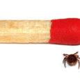 Selle aasta sooja talve tõttu algas puugihammustustest tulenevate haiguste aeg juba veebruaris, kui mitmed Saaremaa perearstid diagnoosisid oma patsientidel puugihammustustest tulenevat bakterhaigust borrelioosi.