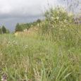 Suvisel ajal, kui rohi lokkab, suhtuvad vallad selle piiramisse kahetiselt. Osa leiab, et vallatee äärset rohtu ei peakski niitma. Teine osa arvab, et vabalt kasvav rohi riivab silma ning teeääred tuleks kindlasti rohust puhastada.