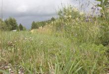 Teeäärte niitmise vajalikkust nähakse valdades erinevalt