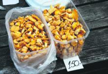 Saaremaa kukeseened kordi kallimad kui mandril