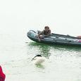 Saaremaal Kailukal toimus Poola treenerite juhendamisel ja kõigi Baltimaade esindajate osavõtul Newfoundlandi koerte, landseeride ja leonbergerite vetelpäästelaager.