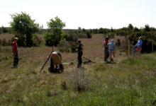 Looduskaitsekeskus püüab päästa Saaremaa tähtsamaid loopealseid