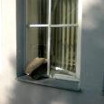 Laupäeva hilisõhtul ja ööl vastu pühapäeva visati Kuressaares Tolli tänaval sisse mitme maja aknad.
