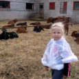 Kärla põllumajandusühistu piimafarmi kaks lahtiste uste päeva tekitas inimestes ootamatult suurt huvi. Külastajaid saabus igast kandist, kohalikest kuni linnameesteni välja.
