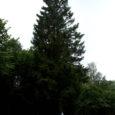 Septembris pole küll kohane rääkida jõuludest, kuid aasta lõpus Kuressaare kesklinna kaunistama hakkav puu on leitud ning ootab oma aega. Selleks, et keegi linna keskväljaku tulevast uhkust ära ei rikuks, on kuusele kinnitatud vastav hoiatussilt.