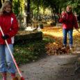 Reedel, 3. oktoobril, kui paljudes koolides oli täiesti tavaline tööpäev, käisid Saaremaa ühisgümnaasiumi õpetajad Kudjape kalmistul talgutel.