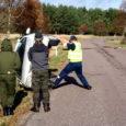 Teisipäeval sõitis Sõrves kraavi auto, mille juht püüdis vältida loomale otsa sõitmist.